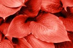 Ρόδινο φύλλωμα με τις σταγόνες βροχής στοκ εικόνες