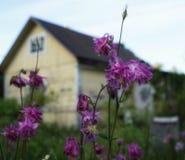ρόδινο aquilegia χωριό ουρανού σπιτιών κινηματογραφήσεων σε πρώτο πλάνο κίτρινο Στοκ φωτογραφίες με δικαίωμα ελεύθερης χρήσης