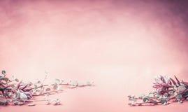 Ρόδινο floral υπόβαθρο με τα λουλούδια και τα φύλλα, έμβλημα ή σύνορα για το γάμο, τη SPA ή την έννοια ομορφιάς Στοκ Εικόνες