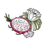 Ρόδινο pitaya Θερινά τροπικά τρόφιμα για τον υγιή τρόπο ζωής Κόκκινα ολόκληρα φρούτα δράκων και μισός, λουλούδι ελεύθερη απεικόνιση δικαιώματος