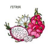 Ρόδινο pitaya Θερινά τροπικά τρόφιμα για τον υγιή τρόπο ζωής Κόκκινα ολόκληρα φρούτα δράκων και μισός, λουλούδι απεικόνιση αποθεμάτων