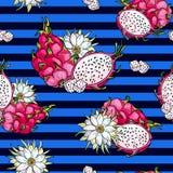 Ρόδινο pitaya Μπλε άνευ ραφής σχέδιο Θερινά τροπικά τρόφιμα για τον υγιή τρόπο ζωής Κόκκινα ολόκληρα φρούτα δράκων και μισός, λου ελεύθερη απεικόνιση δικαιώματος