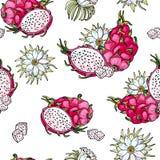 Ρόδινο pitaya r Θερινά τροπικά τρόφιμα για τον υγιή τρόπο ζωής Κόκκινα ολόκληρα φρούτα δράκων και μισός, λουλούδι διανυσματική απεικόνιση