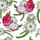Ρόδινο pitaya r Θερινά τροπικά τρόφιμα για τον υγιή τρόπο ζωής Κόκκινα ολόκληρα φρούτα δράκων και μισός, λουλούδι ελεύθερη απεικόνιση δικαιώματος