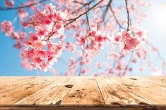 Ρόδινο sakura λουλουδιών ανθών κερασιών στην εποχή υποβάθρου ουρανού την άνοιξη στοκ εικόνα με δικαίωμα ελεύθερης χρήσης