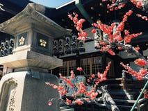 Ρόδινο sakura της Ιαπωνίας στο ναό Στοκ Εικόνες