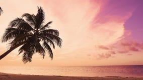 Ρόδινο seascape νησιών παραλιών ήλιων αυγής κίτρινο Φοίνικας πέρα από τη θάλασσα και τα κύματα απόθεμα βίντεο