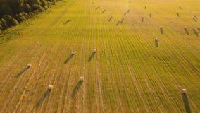 Ρόλοι των θυμωνιών χόρτου στον τομέα φιλμ μικρού μήκους