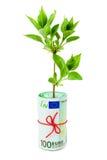 ρόλος φυτών χρημάτων Στοκ Εικόνες