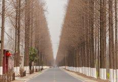 δρόμοι αγροτικοί Στοκ Φωτογραφίες