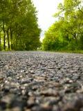 δρόμος πάρκων φθινοπώρου κίτρινος Στοκ εικόνες με δικαίωμα ελεύθερης χρήσης