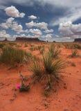 δρόμος πεδίων ρύπου ερήμων μαργαριτών σωρειτών σύννεφων άνθισης φυσικός Στοκ φωτογραφία με δικαίωμα ελεύθερης χρήσης