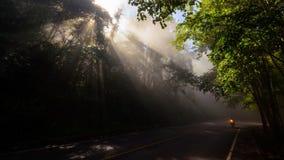 δρόμος στο δάσος με τις ακτίνες Στοκ φωτογραφία με δικαίωμα ελεύθερης χρήσης