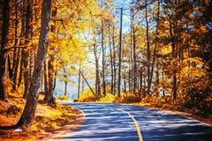 δρόμος στο χρυσό δάσος πεύκων Στοκ Εικόνες
