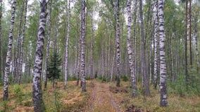 δρόμος φύσης Στοκ Φωτογραφίες
