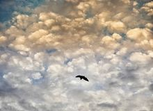 Ρόπαλο που πετά κάτω από τους δραματικούς ουρανούς στοκ φωτογραφία