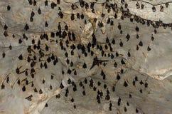 Ρόπαλα που κοιμούνται στη σκοτεινή σπηλιά Στοκ Εικόνες