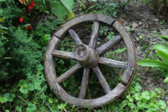 Ρόδα του ξύλου Στοκ εικόνα με δικαίωμα ελεύθερης χρήσης