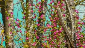 Ρόδινα άνθη Στοκ εικόνα με δικαίωμα ελεύθερης χρήσης