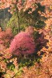 Ρόδινα δέντρα ανθών κερασιών στοκ φωτογραφίες με δικαίωμα ελεύθερης χρήσης