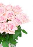 Ρόδινα ανθίζοντας τριαντάφυλλα Στοκ Φωτογραφίες