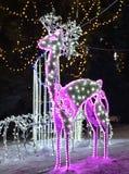 Ρόδινα ελάφια Χριστουγέννων Στοκ Εικόνες