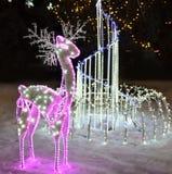 Ρόδινα ελάφια Χριστουγέννων Στοκ Φωτογραφίες