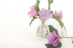 Ρόδινα και ιώδη μπλε λουλούδια πουλιών Στοκ Φωτογραφίες
