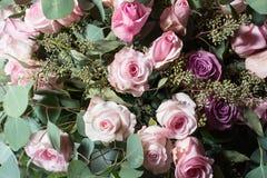 Ρόδινα και πορφυρά τριαντάφυλλα στοκ φωτογραφία
