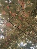 Ρόδινα και πράσινα φύλλα πτώσης στοκ φωτογραφία με δικαίωμα ελεύθερης χρήσης