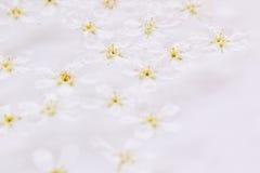 Ρόδινα μικρά λουλούδια στο νερό floral πρότυπο καρδιών λουλουδιών απελευθέρωσης πεταλούδων κίτρινο Γάμος, υπόβαθρο άνοιξη Μακροεν Στοκ εικόνες με δικαίωμα ελεύθερης χρήσης