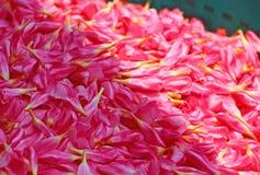 Ρόδινα λουλούδια για τα στεφάνια Ινδία Στοκ φωτογραφία με δικαίωμα ελεύθερης χρήσης