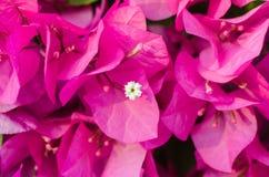 Ρόδινα λουλούδια εγγράφου Στοκ Φωτογραφία