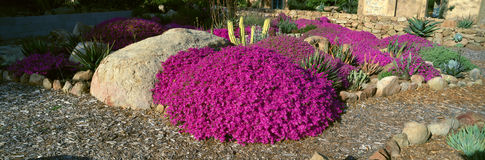 Ρόδινα λουλούδια, κέντρο για τις γήινες ανησυχίες, Ojai, Καλιφόρνια στοκ φωτογραφία με δικαίωμα ελεύθερης χρήσης
