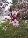 Ρόδινα λουλούδια και δέντρα στοκ φωτογραφία με δικαίωμα ελεύθερης χρήσης