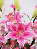 Ρόδινα λουλούδια κρίνων Στοκ φωτογραφία με δικαίωμα ελεύθερης χρήσης
