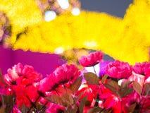 Ρόδινα λουλούδια με το κίτρινο υπόβαθρο bokeh Στοκ Φωτογραφίες
