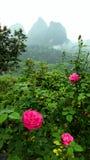 Ρόδινα λουλούδια με το τοπίο βουνών της Κίνας Στοκ Εικόνες