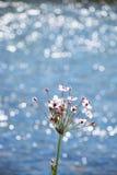 Ρόδινα λουλούδια μπροστά από έναν λαμπιρίζοντας ποταμό Στοκ Εικόνες