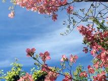 Ρόδινα λουλούδια μπλε ουρανών Στοκ εικόνα με δικαίωμα ελεύθερης χρήσης