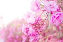 Ρόδινα λουλούδια στο μαλακό χρώμα κρητιδογραφιών στο ύφος θαμπάδων Στοκ εικόνες με δικαίωμα ελεύθερης χρήσης