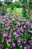Ρόδινα λουλούδια στο πάρκο Heyritz του Στρασβούργου Στοκ φωτογραφίες με δικαίωμα ελεύθερης χρήσης