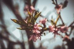 Ρόδινα λουλούδια Στοκ Φωτογραφία