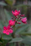 Ρόδινα λουλούδια Στοκ Εικόνες