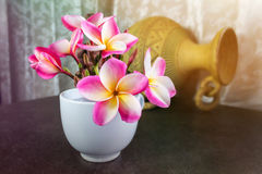 Ρόδινα λουλούδια frangipani ή plumeria στο άσπρο μεγάλο φλυτζάνι με το boutiq Στοκ εικόνα με δικαίωμα ελεύθερης χρήσης