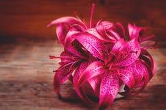Ρόδινα λουλούδια Lilia στοκ εικόνες