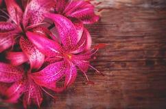 Ρόδινα λουλούδια Lilia στοκ φωτογραφίες με δικαίωμα ελεύθερης χρήσης