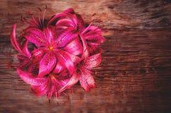 Ρόδινα λουλούδια Lilia στοκ εικόνα με δικαίωμα ελεύθερης χρήσης