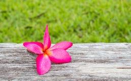 Ρόδινα λουλούδια plumeria σε ένα ξύλινο υπόβαθρο Στοκ φωτογραφία με δικαίωμα ελεύθερης χρήσης
