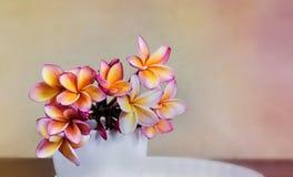 Ρόδινα πορτοκαλιά λουλούδια frangipani ή plumeria στο άσπρο μεγάλο φλυτζάνι στο W Στοκ Εικόνα